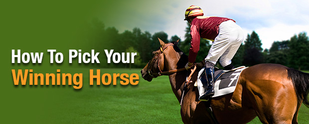 winning race horse